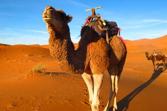 3 Days Marrakech To Fez Desert Tour